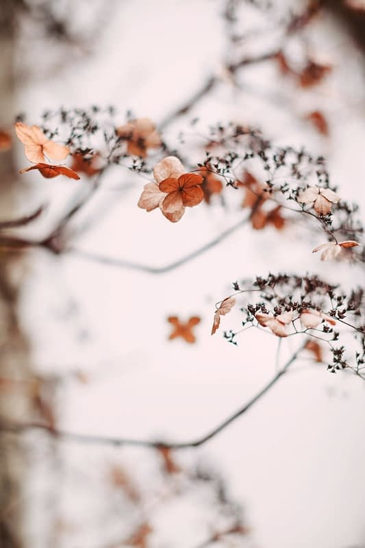 """Image by <a class=""""text-taupe-100"""" href=""""http://christinasarah.com"""" target=""""_blank"""">Christina Sarah Photography</a>."""